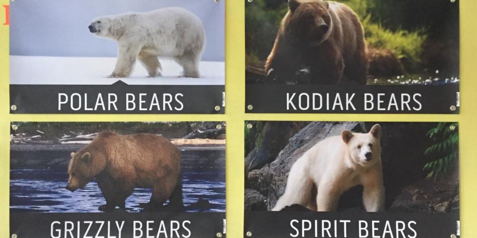 Bear Houses